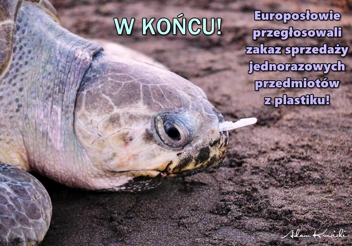 turtle112e